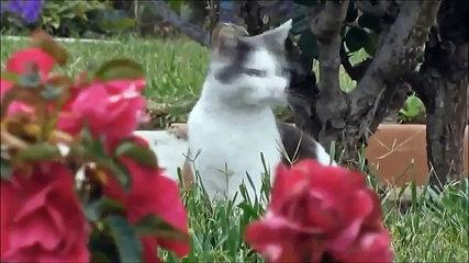 Funny Viral Cat Videos Compilation Of All Time