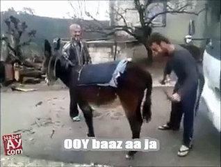Very funny donkey video