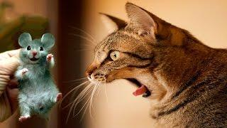 FUNNY CUTE CAT COMPILATION 2017 | Funny Videos 2017 *Life Awesome*