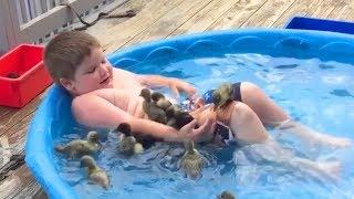 Try Not To Laugh Watching Funny Animals Compilation 2017 | Funny Kids vs Animals Videos 2017