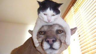 The funniest and most hilarious ANIMAL videos #1 - Funny animal compilation - Watch & laugh!