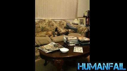 animals-funny videos-11