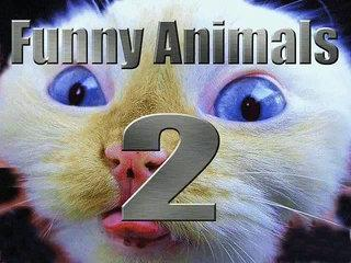 Very Funny Animals 2