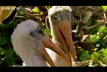 Punjabi Funny Clips birds and annimalls talking funny in Punjabi totay