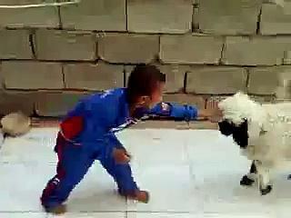 Crying Boy VS Angry Sheep - Funny