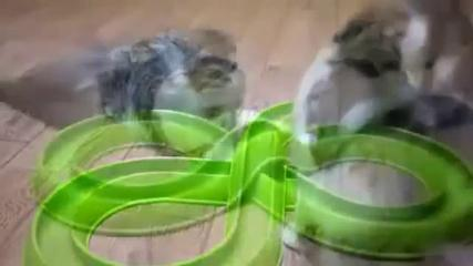 Funny Cats Compilation 20 Min - Happy New Year 2014