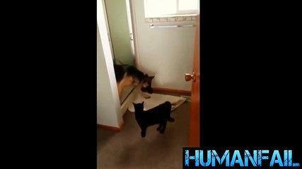 animals-funny videos-12