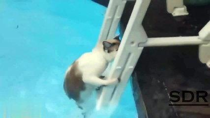 Crazy and Funny cat fails PART 13 by SDR