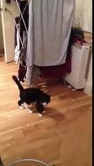 FUNNY CAT WALK!