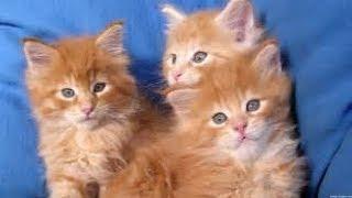 SUPER FUNNY ANIMAL VIDEOS - Funny ANIMAL clips 36
