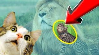 BEST Scared CATS Compilation 2017 - FUNNY CAT Videos & Fearless Kittens (MUST WATCH NOW!)