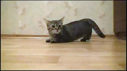 Funny Video Kitten Ready, Set, Go