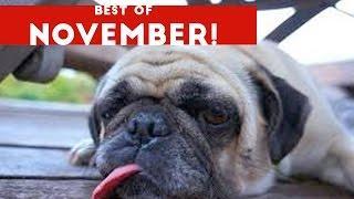 Funniest Pet Reactions & Bloopers of December 2016 Week 1   Funny Pet Videos