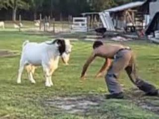 Funny pathan fight with Goat