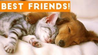 Cutest Animal Friendships Compilation 2017| Funny Pet Videos