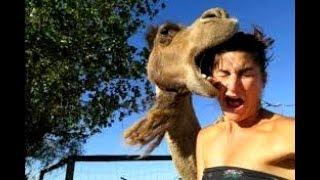 Try not to get HEART ATTACK FROM LAUGHING too hard - Best FUNNY FAIL & ANIMAL VIDEOS compilation
