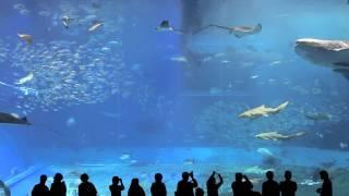 Aquarium Relax Music