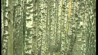 Lövträden - En Framtidsresurs