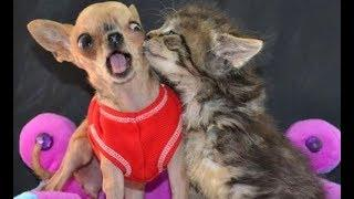 EXTREMELY funny CATS and DOGS will MAKE you LAUGH - Funny CAT and DOG compilation