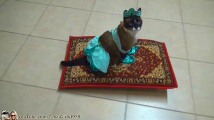 Funny Cat Rides Magic Carpet