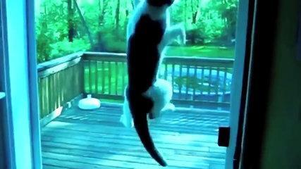 قطط مضحكة جداً   funny Cats