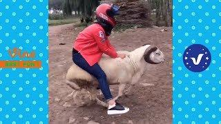 Funny Videos 2017 ● People doing stupid things P24