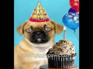 Pug Sings Happy Birthday - Hilariously Funny Dog Vide