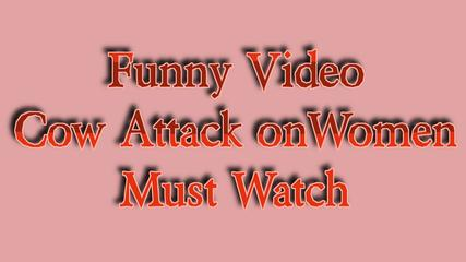 Funny Video-Cow Attack