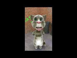 Cat punjabi funny wedding Video