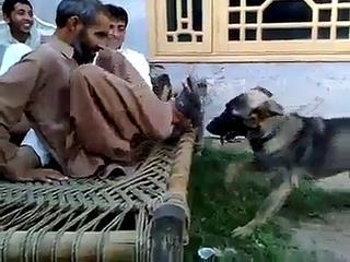 Pashto Funny Video Dog Prank - Funny Pathan In Action