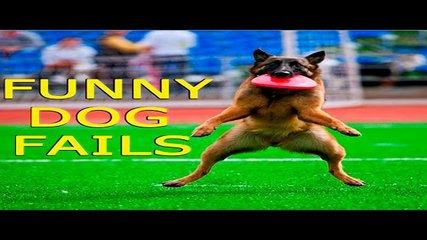 Best Funny Animal Compilation 2016 April #5