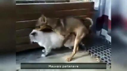 Funny Moments Of Animals