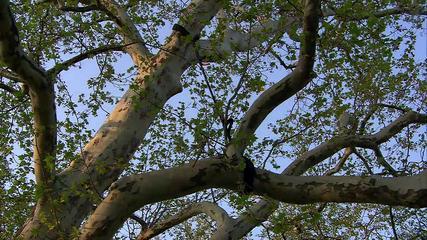 Cobra® Tree Cabling - Tutorial Video (English)