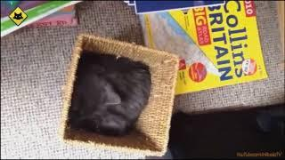 FUNNY VIDEOS: Funny Cats - Funny Cat Videos - Funny Animals - Funny Fails - Funny Cats Sleeping