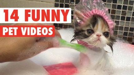 14 Funny Pet Videos 2016