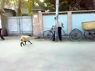 funny police and goat