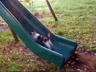 Funny Cat Fails-ganAki3VRrs