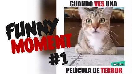 ✔ QUAND VOUS VENEZ UN FILM DE TERROR! (DÉCEMBRE 2016) || MOMENT FUNNY # 1