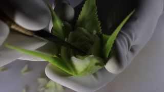 TUTORIAL 2 Thai Carving Fruit ( Daniele Barresi )