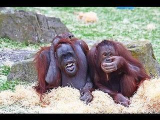 funny animals - smiling-sbOY7Wpsz74