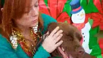Funny Cute Girl and Dog Kissing