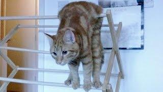 ANIMAL VIDEOS so FUNNY you will FALL OUT OF CHAIR LAUGHING - Funny ANIMAL compilation
