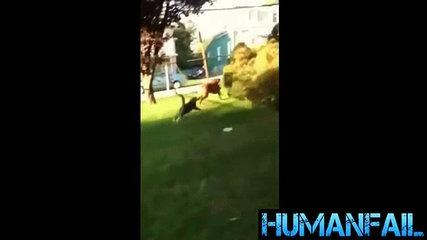 animals-funny videos-3