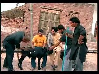 Whatsapp Funny Video   Bakra For Sal