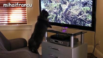 Funny Cats MUst WatCH