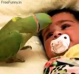 Baby with parret funny video 2018