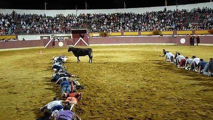 (Funny)Bullfighting with stupid mankind