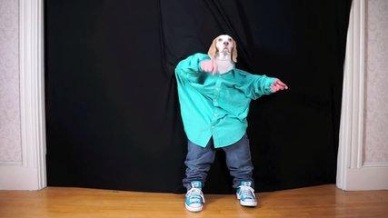 Funny Dog Maymo Dancing !