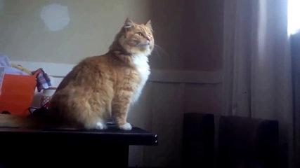 Funny Cat Fails Hilariously At Epic Window Jump - CatNips