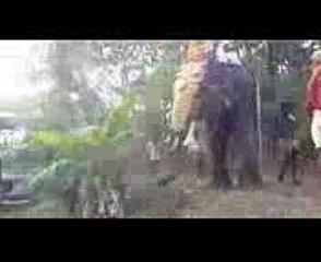 Kerala elephant funny video